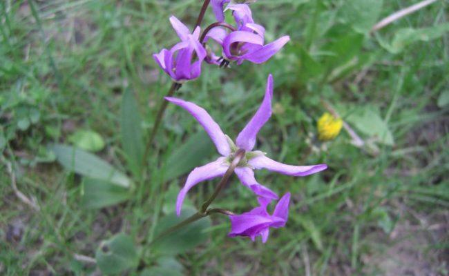 wildflowers_2