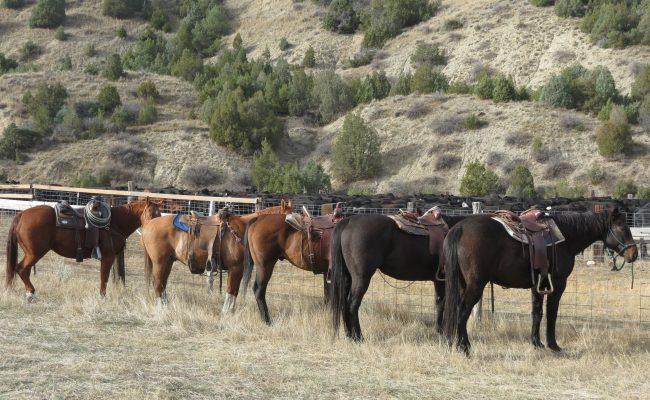 horses_on_duty