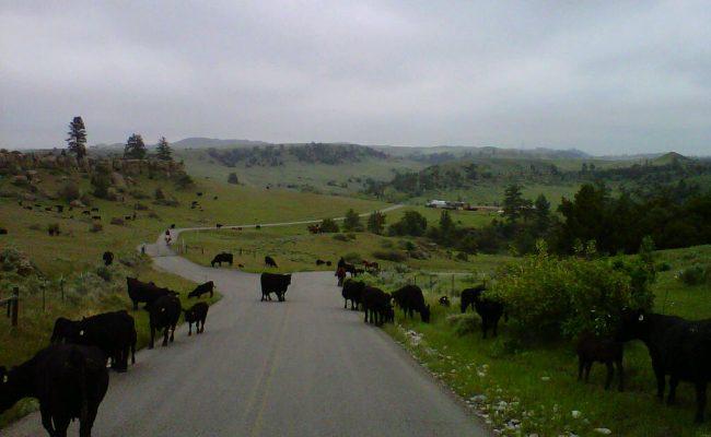 montana_traffic_jam