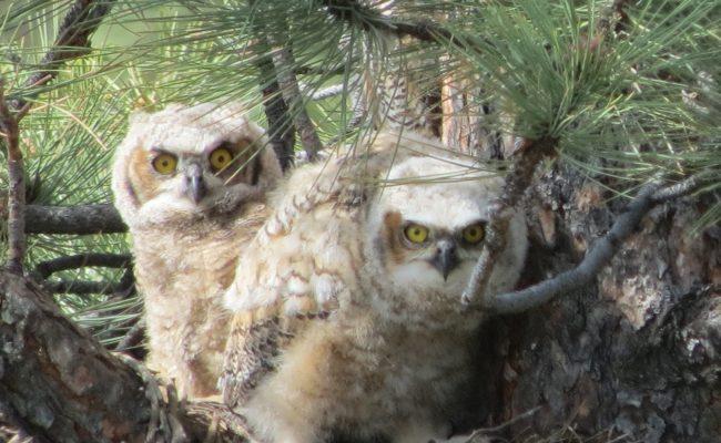 owls_1