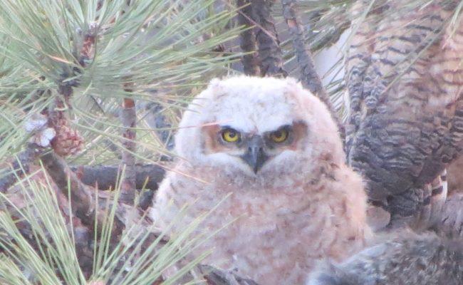 owls_3