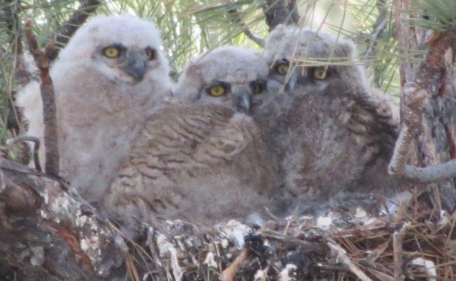 owls_4